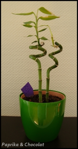 Bambous_5aout2013_1_blog