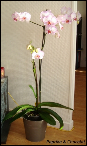 Orchidee-Geante_04septembre2013_blog