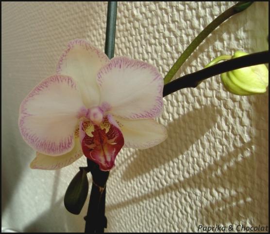 Orchidee-Geante_16mai2014_3_blog