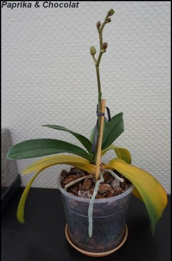 OrchideeBlanche_23Decembre2015_1_blog